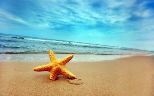starfish on a beach